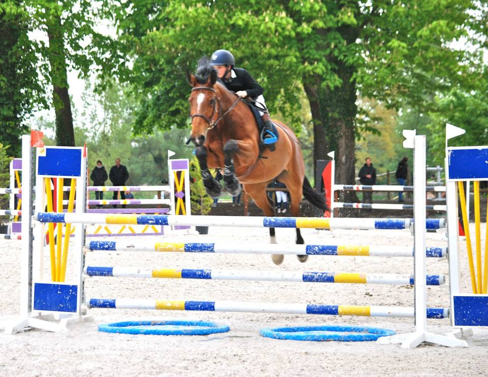 concours-obstacles-jumping